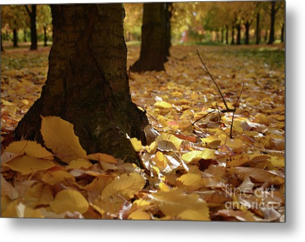 Magic Autumn  Metal Print