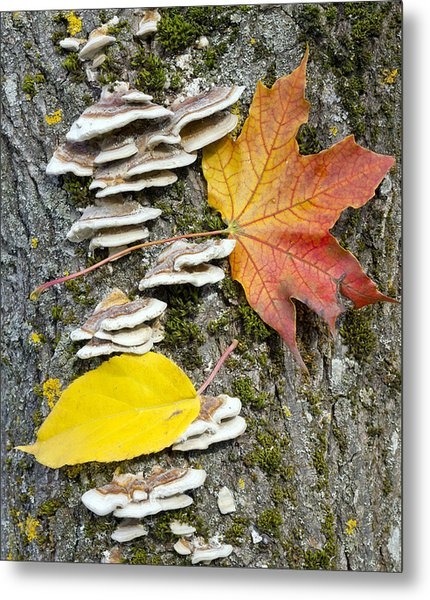Maple Autumn Leaf On A Tree Trunk Metal Print