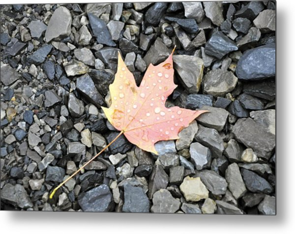 Maple Leaf In The Rain Metal Print