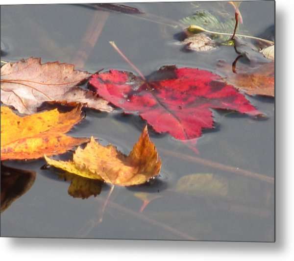 Maple Leaf Reflection Metal Print