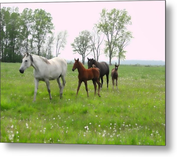 Mares And Foals In Dandelions Metal Print