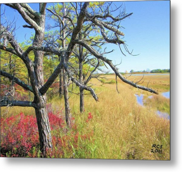 Marsh Trees Metal Print