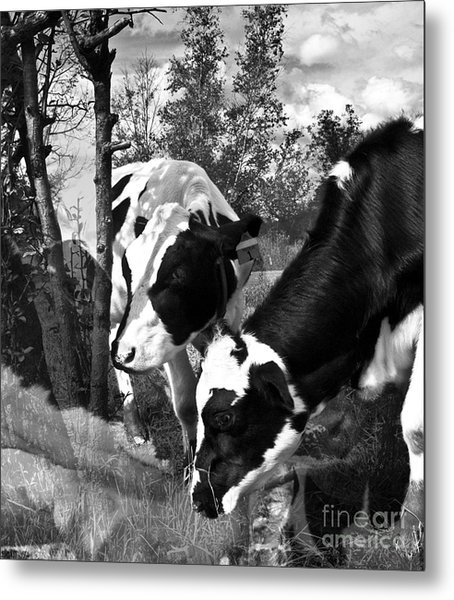 Matilda And Zoey In The Warm Afternoon Sun Metal Print