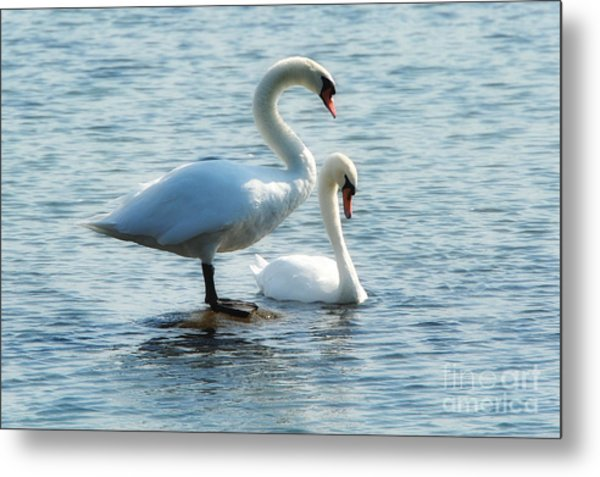 Mating Pair Metal Print