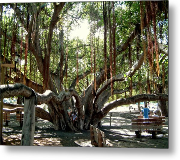 Maui Banyan Tree Park Metal Print