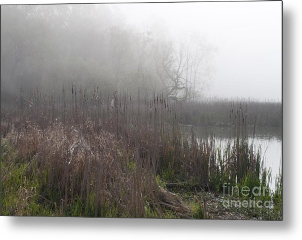 Mclaughlin Bay In The Fog Bulrushes Metal Print by Gary Chapple