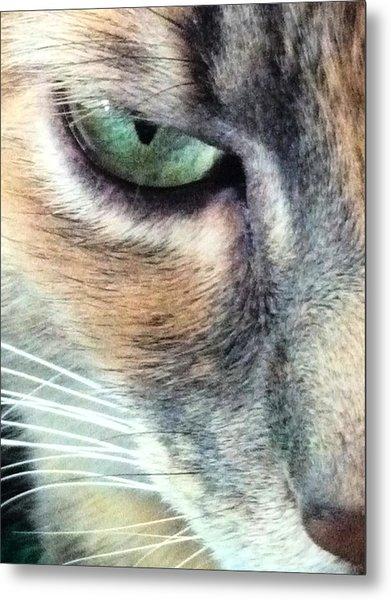 Meow Meow Metal Print by Tia Anderson-Esguerra