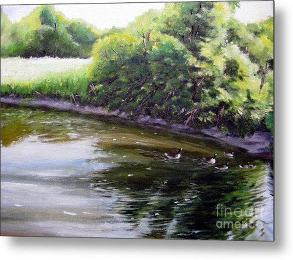 Mid Summer Day Canada Geese Metal Print