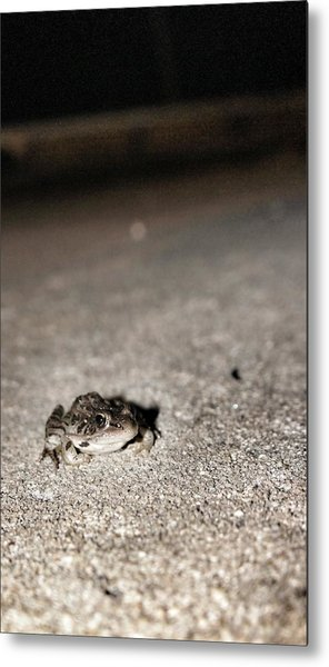 Midnight Frog Metal Print