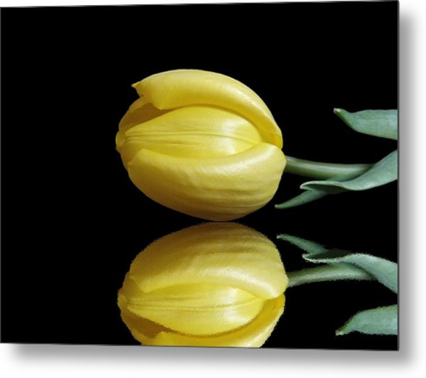 Mirrored Tulip Metal Print