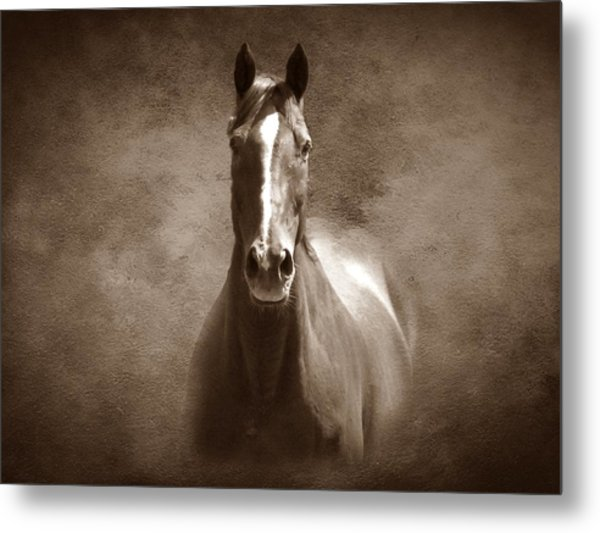 Misty In The Moonlight S Metal Print