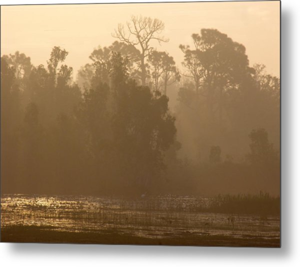Metal Print featuring the photograph Misty Wetlands by Grace Dillon