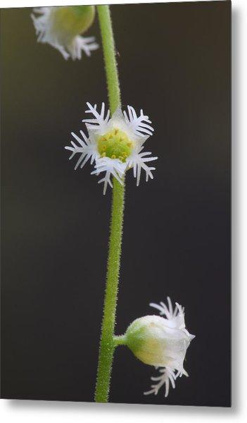 Miterwort Flowers Metal Print