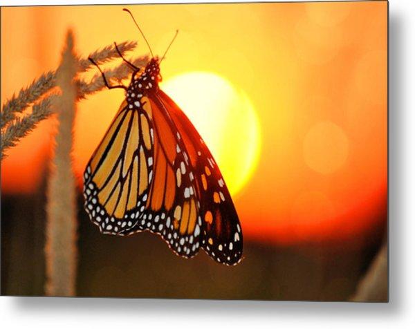 Monarch Sunset Metal Print