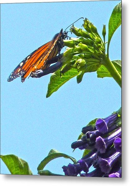 Monarch With Purple Flower Metal Print