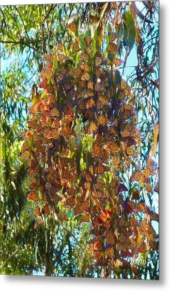 Monarchs At Rest Metal Print