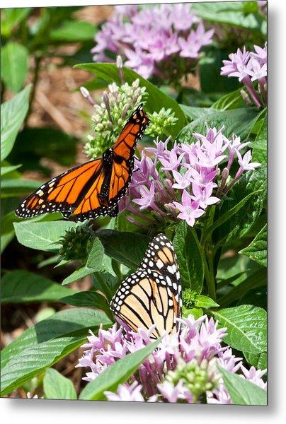 Monarchs Metal Print