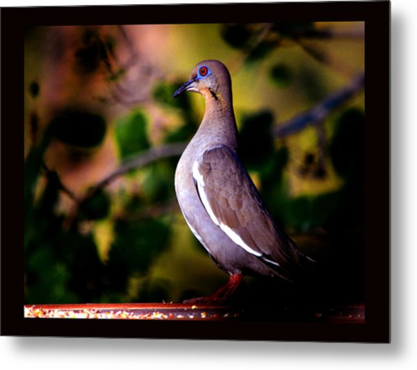 Morning Dove In Evening Metal Print