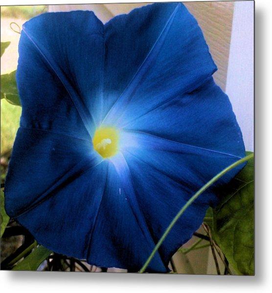 Morning Glory Blue Metal Print