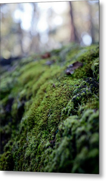 Mossy Log Metal Print