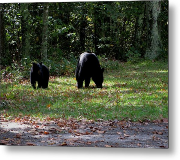 Mother Bear And Cub Metal Print by Kathy Long