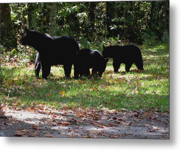 Mother Bear And Three Cubs Metal Print by Kathy Long