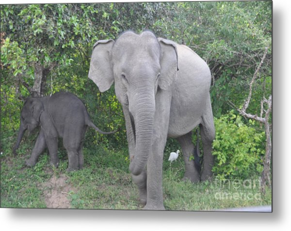 Mother Elephant And Baby Metal Print
