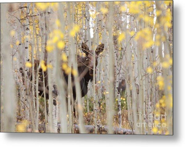 Mother Moose In The Aspens Metal Print
