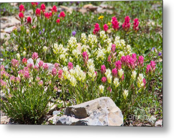 Metal Print featuring the photograph Mother Nature's Master Garden by Katie LaSalle-Lowery