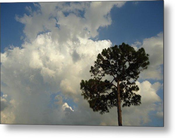 Mottled Clouds And Scrub Pine Metal Print by Debbie Wassmann