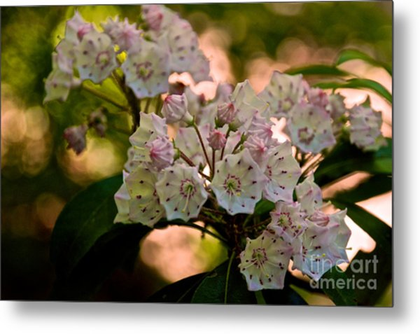 Mountain Laurel Flowers 2 Metal Print