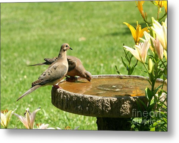 Mourning Doves Metal Print