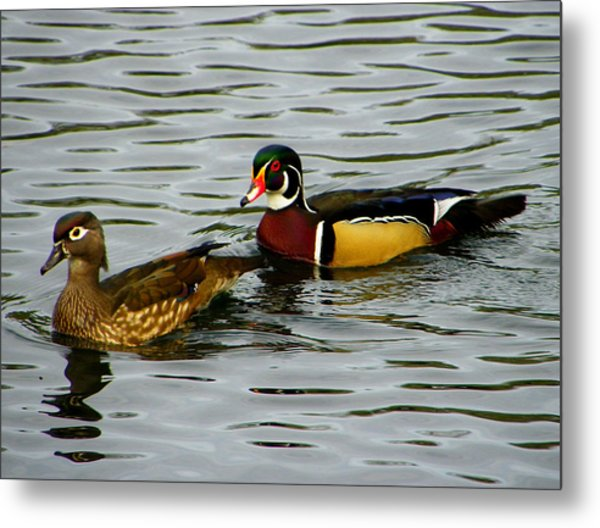 Mr And Mrs Wood Duck Metal Print by Judy Wanamaker