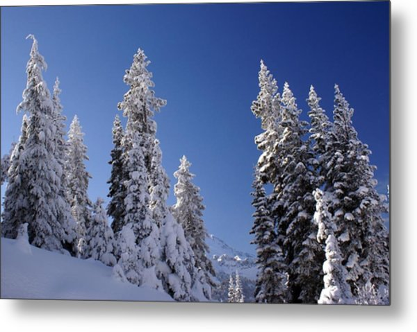 Mt. Rainier's Christmas Tree's Metal Print