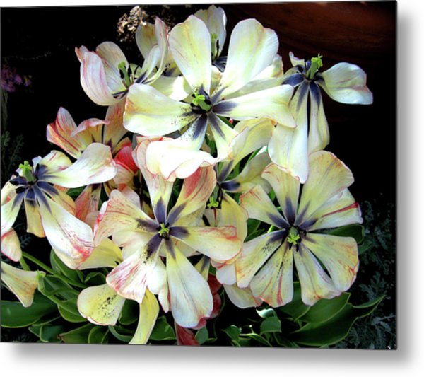 Multicolored Beauties Metal Print by Ed Golden