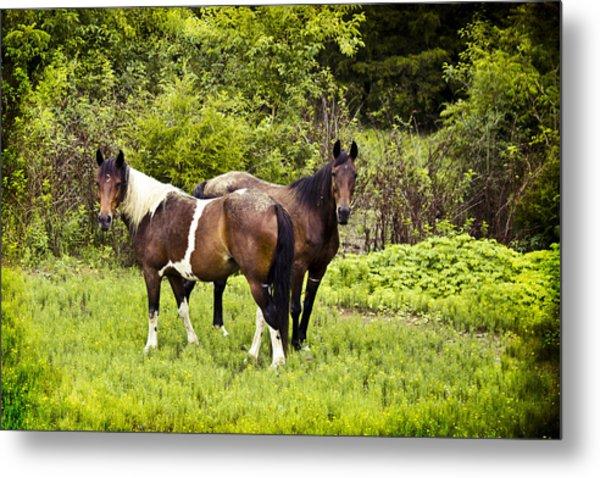 Mustangs Metal Print by Elizabeth Wilson