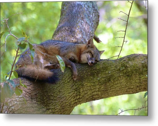 Metal Print featuring the photograph Nap Time by Ralph Jones