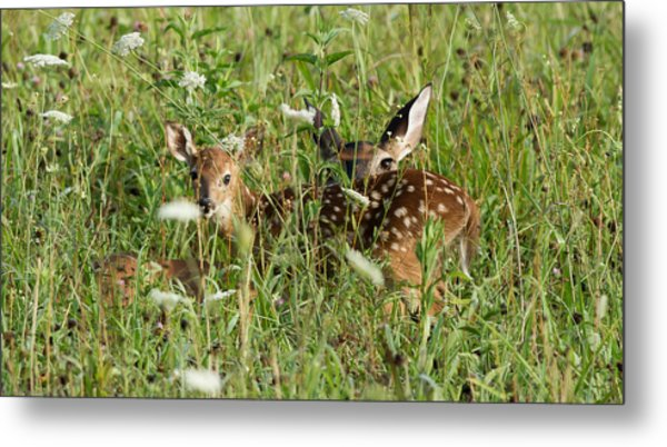 Nature Beauty  Metal Print by Glenn Lawrence