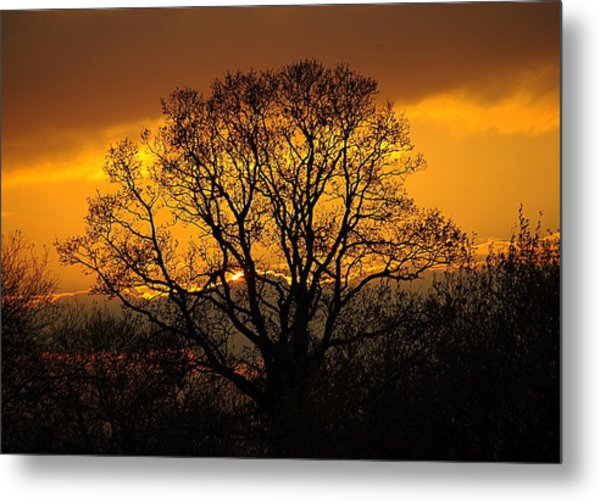 Nature's Gold Metal Print by Cat Shatwell