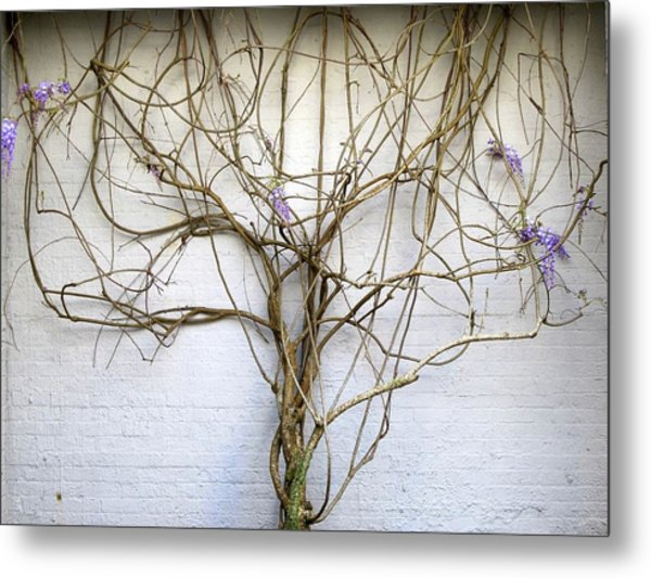 Metal Print featuring the photograph Nature's Growth by Ralph Jones