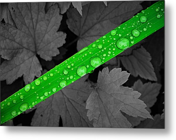 Natures Ribbon Metal Print by Paul Causie