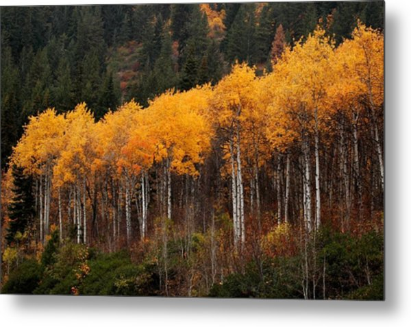 Near Leavenworth Wa Metal Print
