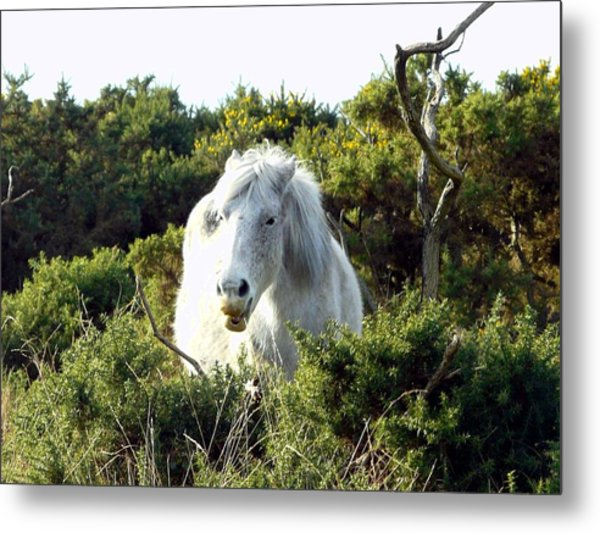 New Forest Pony Metal Print by Rdr Creative