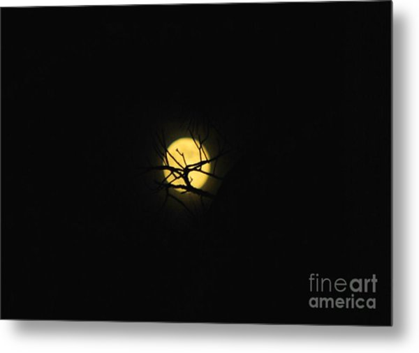 Night Sky In The Woods Metal Print by Monica Poole