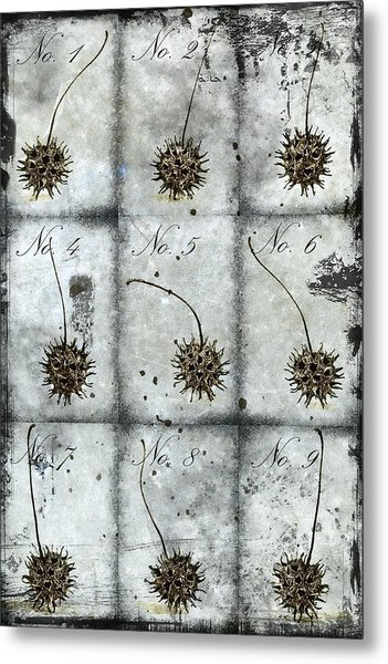 Nine Seed Pods Metal Print