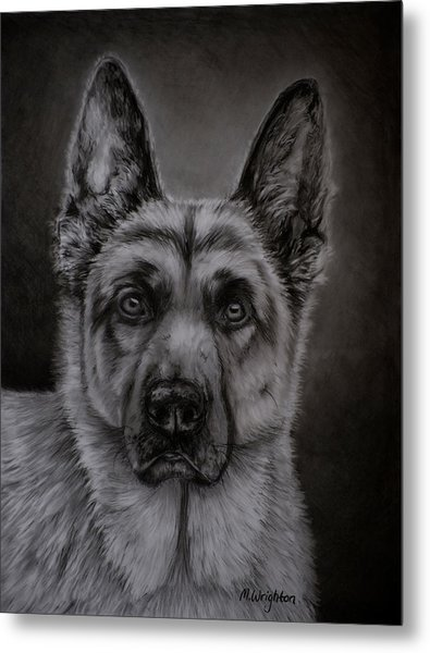Noble - German Shepherd Dog  Metal Print