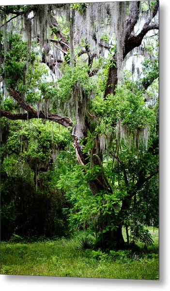 Oak And Moss Metal Print
