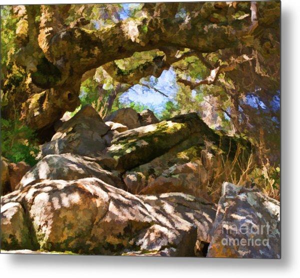Oak Canopy Metal Print