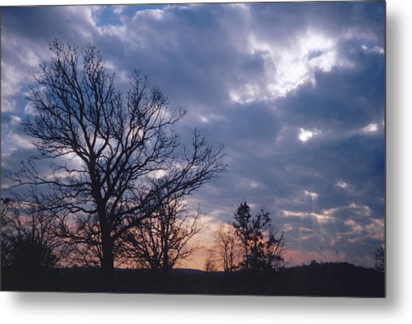 Oak In Sunset Metal Print