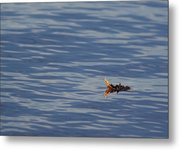 Metal Print featuring the photograph Oak Leaf Floating by Daniel Reed